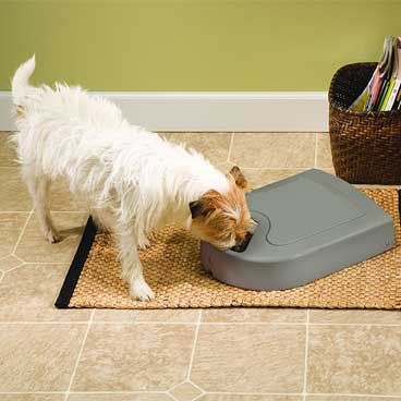 Automatic Cat Feeder Reviews For Your Cat
