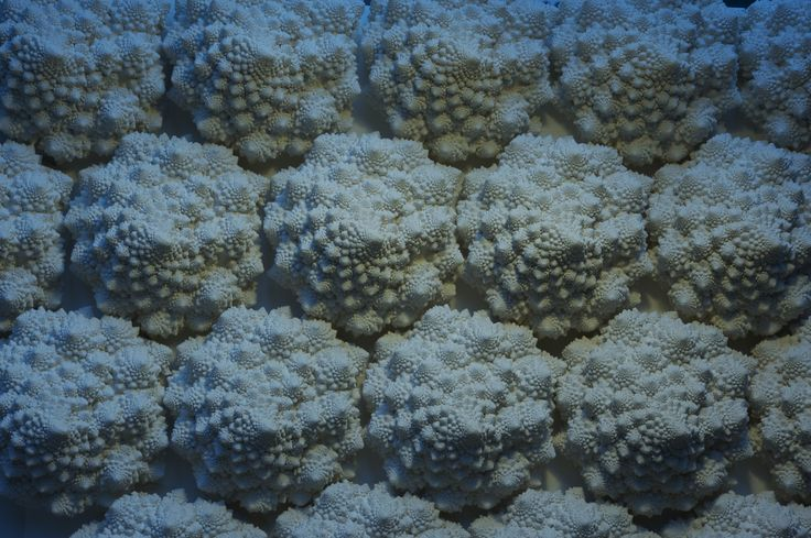 """Systema naturae"" Cast plaster, porcelain, stoneware, sand"
