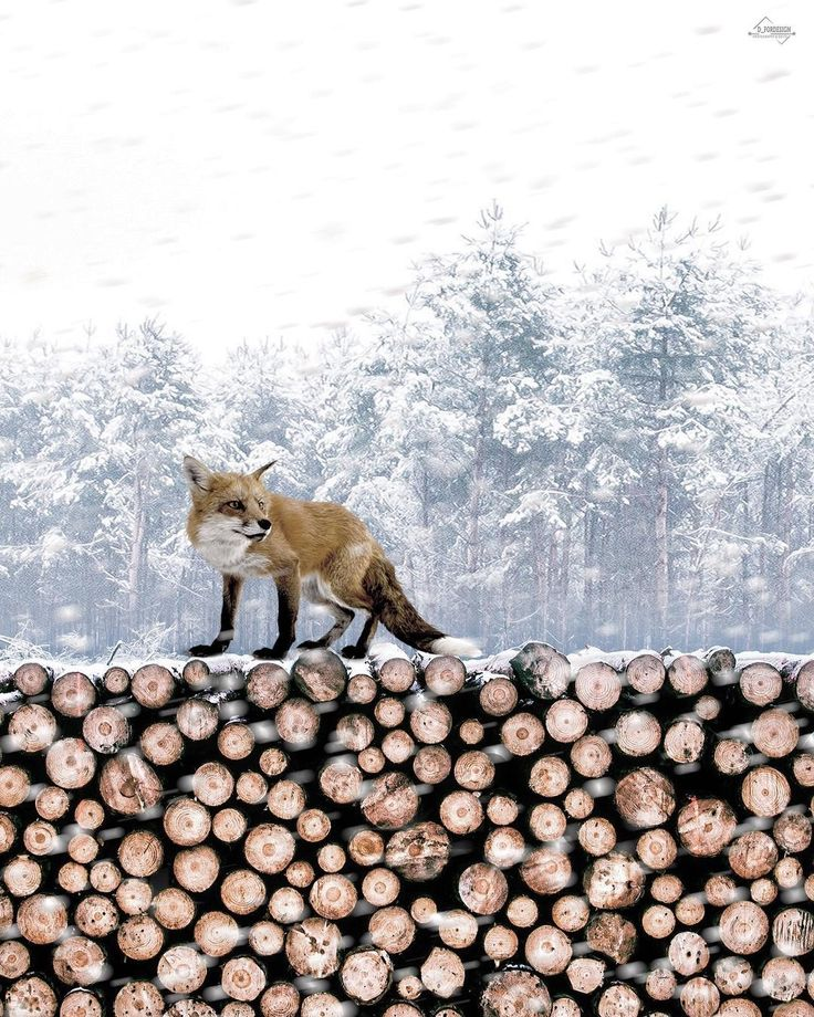 Amazing fox portrait by Dimitris
