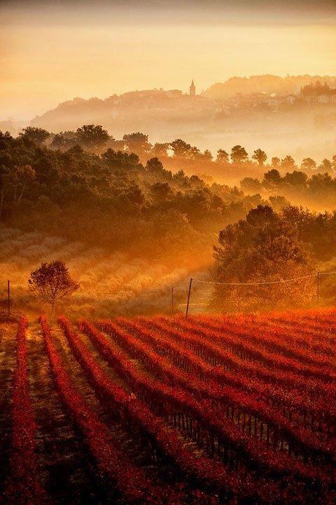 followthewestwind:  (via Pinterest) Vineyards, Umbria, Tuscany, Italy