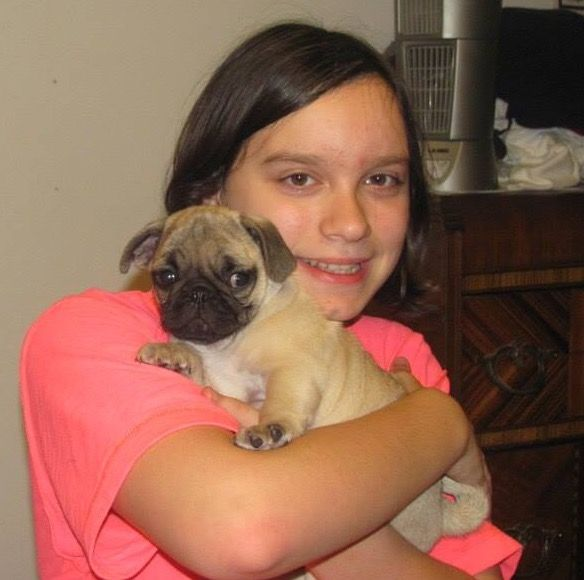 Franklin the pug is nine weeks old and comes home!