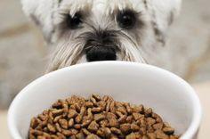 ¿Qué nutrientes debe contener un buen alimento balanceado para perros?
