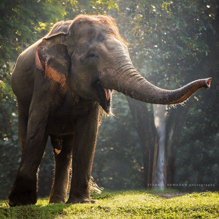 A Sumatran elephant at Ragunan Zoo, Jakarta.