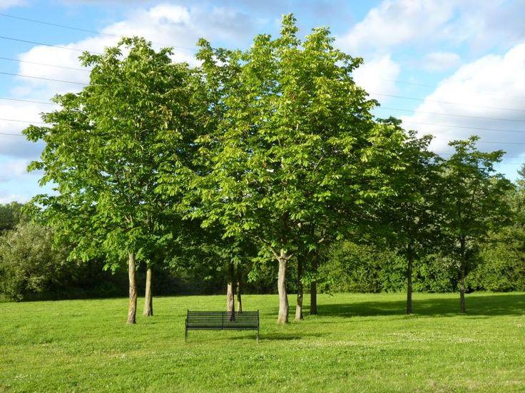 ¿Cuándo se pueden comprar árboles? - http://www.jardineriaon.com/cuando-se-pueden-comprar-arboles.html