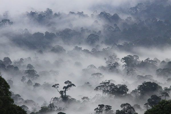 Being remote from human habitation and almost alien to modern civilization makes the Danum Valley Conservation Area is a naturalists' paradise.Recognized as one of the world's most complex ecosystem, this forest serves as a natural home for