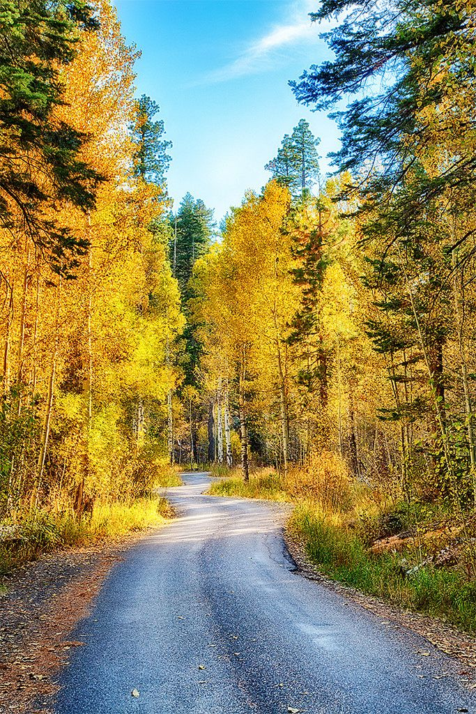 A row of Golden nature in South Lake Tahoe Fall Scenes | by Sierra Springs Photography. http://visit-eldorado.com/