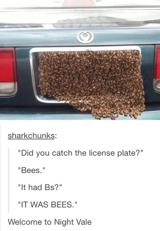 THE LICENSE PLATE WAS ENTIRELY CONSISTED OF BEES, YOU HEARD ME RIGHT PEOPLE, BEES, YOU KNOW THE ONES THAT GO BUZZ ?