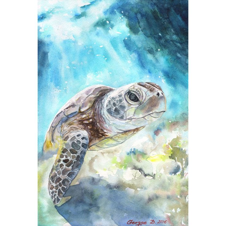 Marmont Hill - 'Sea Turtle' by George Dyachenko Painting Print on Wrapped Canvas                                                                                                                                                                                 More