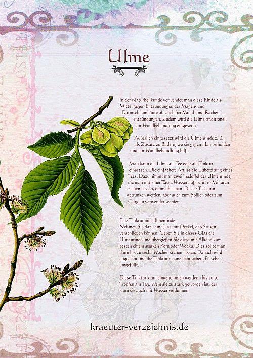 Die Ulme - Trägt man die Ulme bei sich, beschützt sie gegen Blitzschlag und zieht die Liebe an