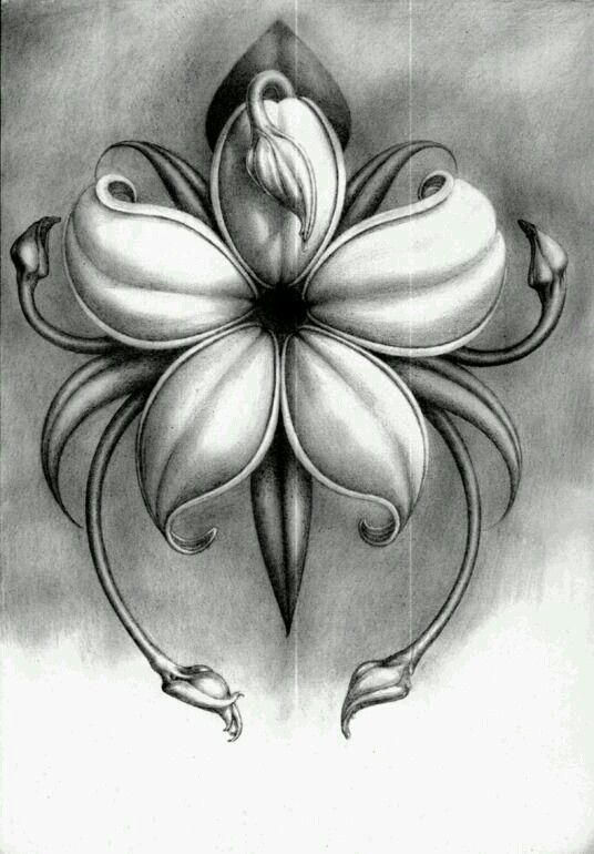 ... Notes pencil drawings on pinterest pencil drawings of flowers