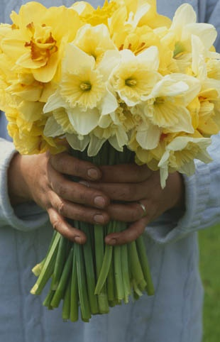 Narcissen horen bij het voorjaar!