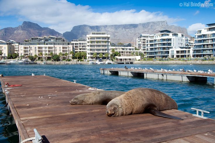 Things To Do in Cape Town: Wildlife Adventures In and Around The Mother City http://travel4wildlife.com/things-to-do-in-cape-town-wildlife-adventures-in-the-mother-city/