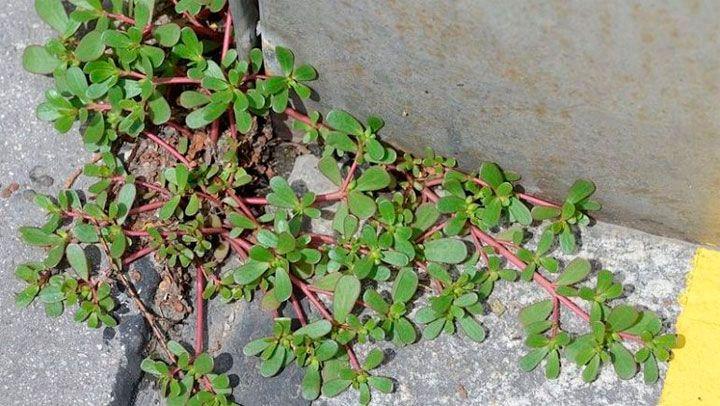 Si ves una planta como esta en tu hogar nunca la arranques, esta es sumamente poderosa no vas a creer cual es.