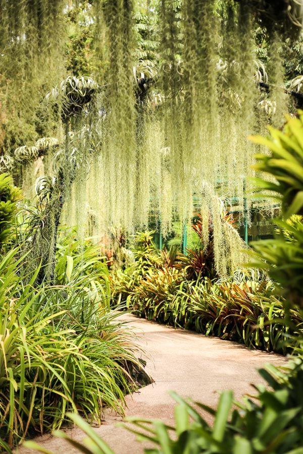 Singapore S Botanic Gardens A Unesco World Heritage Site Singapore Botanic Gardens Tropical Garden Design Botanical Gardens
