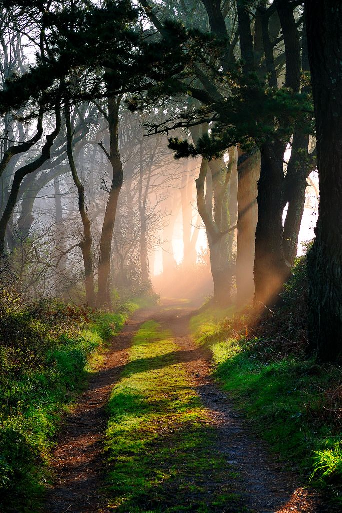 ~~Poldark's Path   ancient tinners path near Cornwall. The path leads down to…
