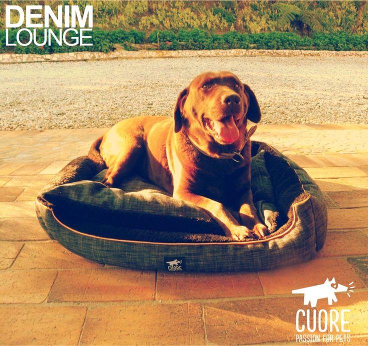 Isa, feliz y cómoda en su nueva Denim Lounge. Disponible para entrega inmediata en tallas S, M y L #cuore #passionforpets #labrador #photooftheday #beautiful #dogs #perros #bestoftheday #dogbeds