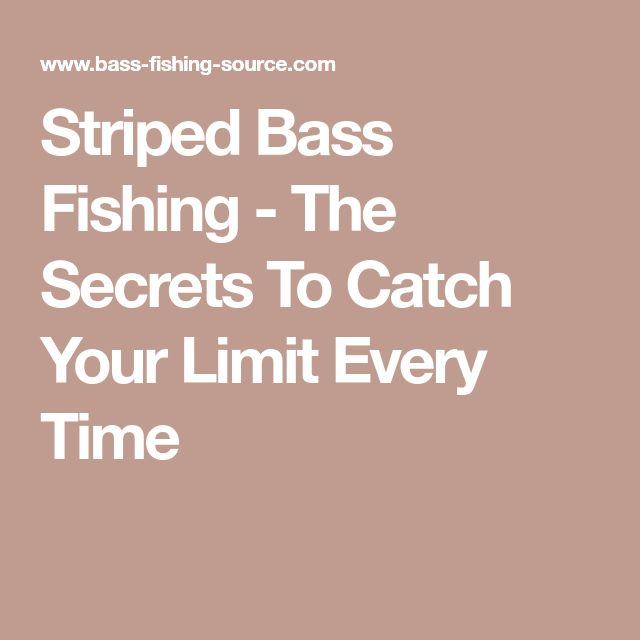 Striped Bass Fishing - The Secrets To Catch Your Limit Every Time