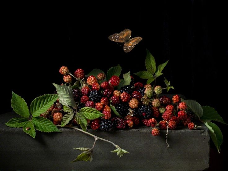 Paulette Tavormina, Blackberries and Butterfly, After AC, 2015, Robert Klein Gallery
