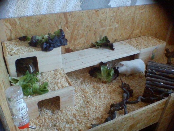 Meerschweinchen Ratgeber: Häuser und Inventar selbstgemacht