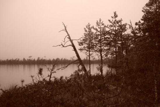 Шабаш ведьм или первая гусиная охота. | Отчеты об охоте | Блоги | Охота без границ. Питерский Охотник. Сайт для всех любителей охоты и рыбалки