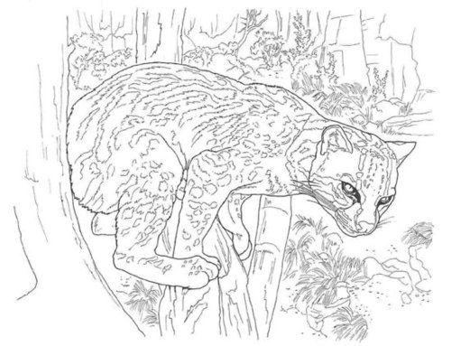 how to draw a ocelot