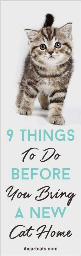 9 Things To Do Before Bringing A New Cat Into Your Home