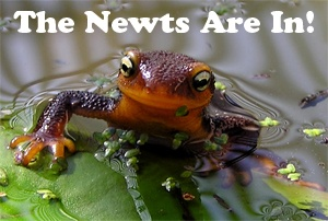 Newts at the UC Botanical Garden  Docent Explainers: Newts at the Japanese Pool  Sunday, February 10: 2 - 3:30 p.m.  Sunday, February 17: 2 - 3:30 p.m.  Monday, February 18: 2 - 3:30 p.m.