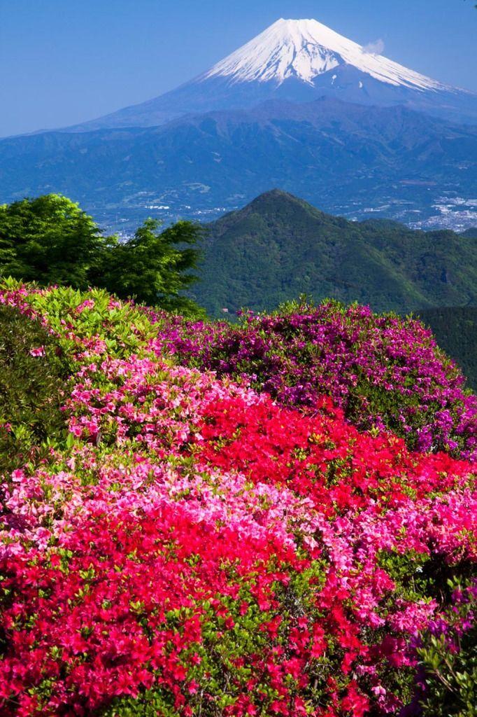 五月晴れ  Mt. Fuji