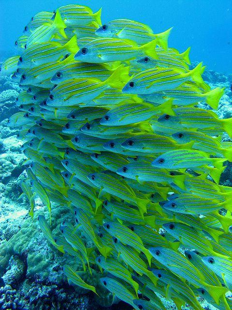 A beautiful school of pretty colored fish