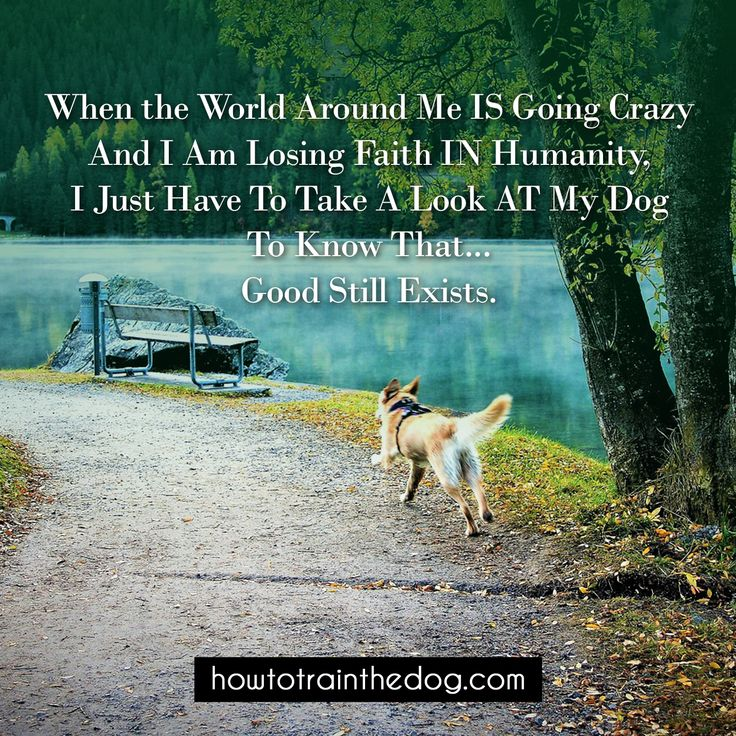 When the World Around Me IS Going Crazy And I Am Losing Faith IN Humanity, I Just Have To Take A Look AT My Dog To Know That... Good Still Exists. #dogs #doglovers #dogbreeds #dogquotes #dogquote #puppies