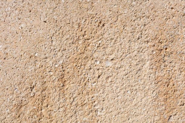 sandstone texture with fossils