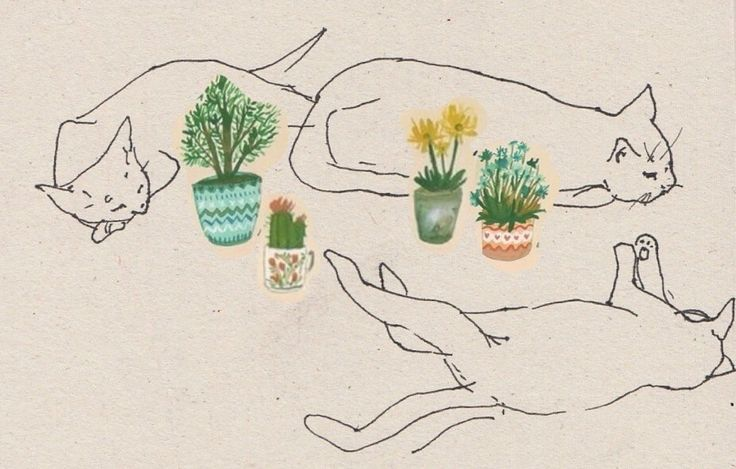 tumblr masaje golondrina