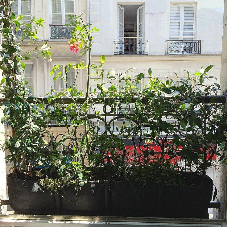 Pour un rebord de fenêtre très étroit la jardinière BACSAC® est parfaite! Par Jean-Michel Martin -Paysagiste