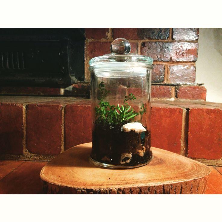 Medium Terrariums $25 each. Contact threelineterrarium@gmail.com