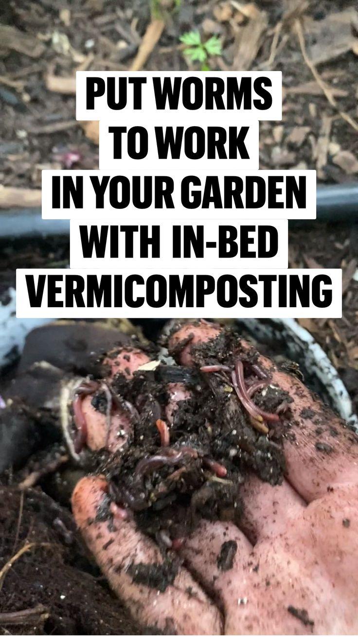 Garden Yard Ideas, Garden Beds, Garden Projects, Garden Plants, Small Backyard Design, Small Backyard Patio, Backyard Ideas, Backyard Pools, Backyard Landscaping