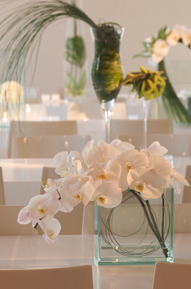 Best images about phalaenopsis orchids arrangements on