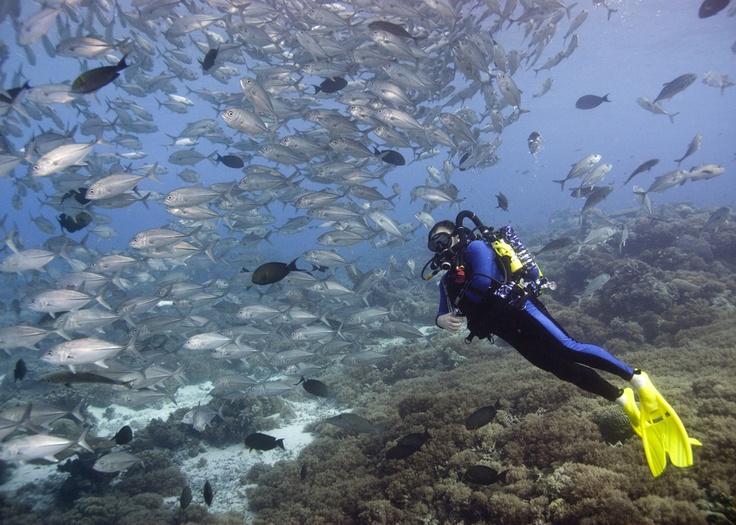 Tubbataha Reef, Sulu Sea, Philippines