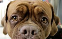 Wiesbaden: 14 Hunde aus österreichischem Auto geholt - Veterinäramt entscheidet