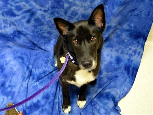 Allie Is An Adoptable Border Collie Searching For A Forever Family