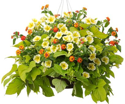 pretty hanging basket