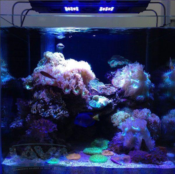 intstalasi aquarium air laut di jakarta timur