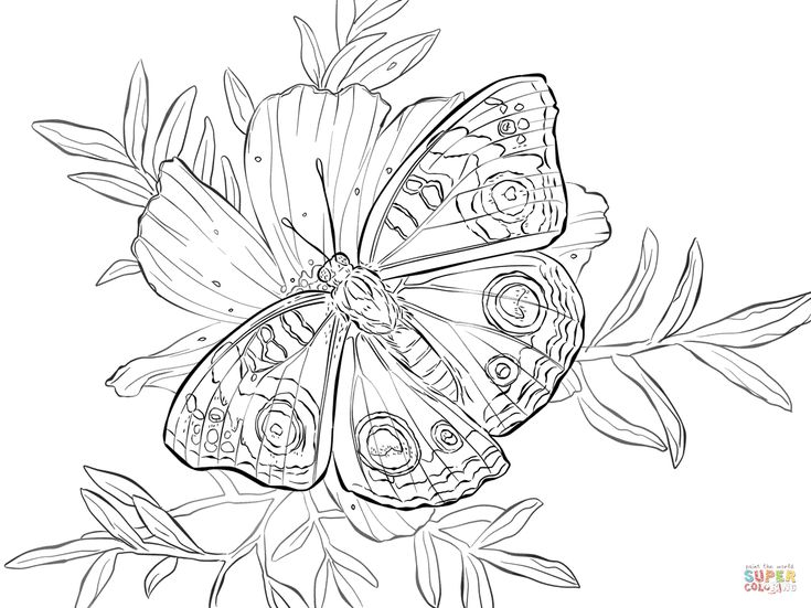 Buckeye Butterfly On A Flower Coloring Page From Category Select 24659 Printable Crafts Of Cartoons Nature Animals Bible And Many More