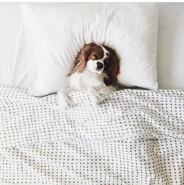 Awwwww, this is the life! ♕ pinterest: torithatgirrl IG: tornado.bby ♕