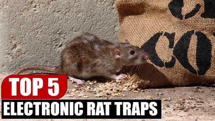 Top 5 Best Electronic Rat Traps | Top 5 Rat Traps Review By Dotmart