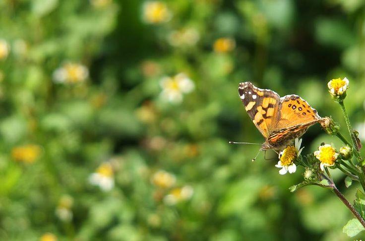 Tengo una fascinación por la fotografía y por las mariposas ... una de las mejores fotos que he sacado.