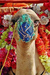 signification reve chameau
