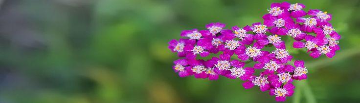 Herbář jedlých rostlin pro tisk | Slunečný život