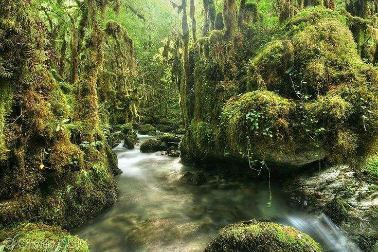 """Ce paysage tropical se situe en France.La Gourgue d'Asque bénéficie d'un micro-climat chaud et humide, au point qu'elle est surnommée """"l'Amazonie des Pyrénées"""". - SCMB Images"""