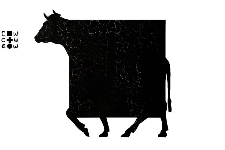 Алла Сорочан, Корова и квадрат. фестиваль дизайна CowFest