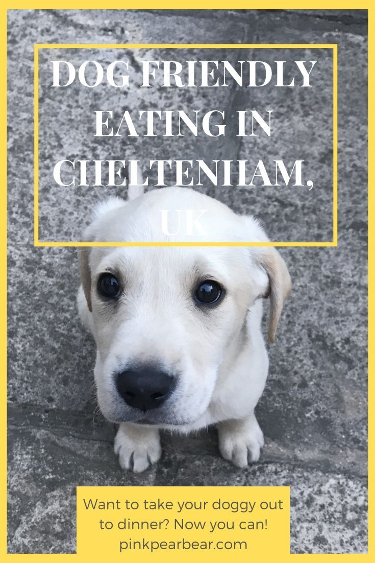 Dog Friendly Places To Eat Out At In Cheltenham Gloucestershire Dog Friends Dogs